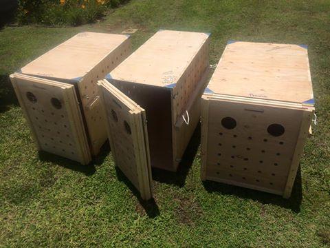 Dog Air Travel Crates Uk
